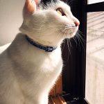 ハーバーハウス新入社員ブログ 私の愛猫のご紹介♪♪